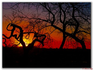 Sunset - Ngwenya Lodge | by hannes.steyn