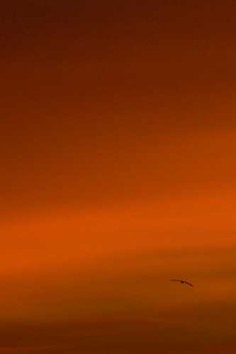 Flying into the Sunset | by Davo McDougall