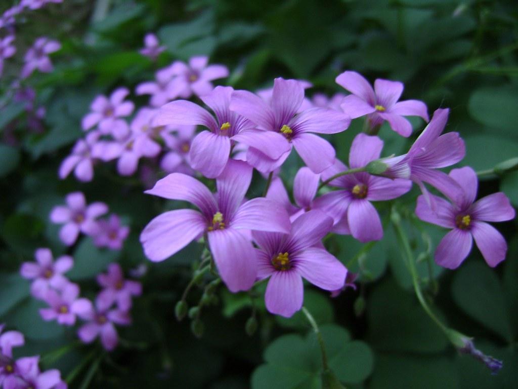 Small flowers Marina Castillo