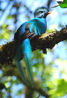 Male Resplendent Quetzal | by DocNordic