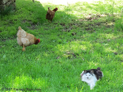 Peace and harmony in the yard | by Farmgirl Susan