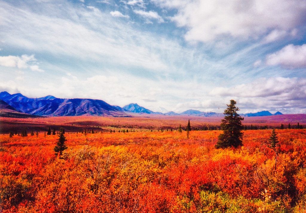 Autumn Tundra I Spent The Summer Of 95 In Alaska Denali Flickr