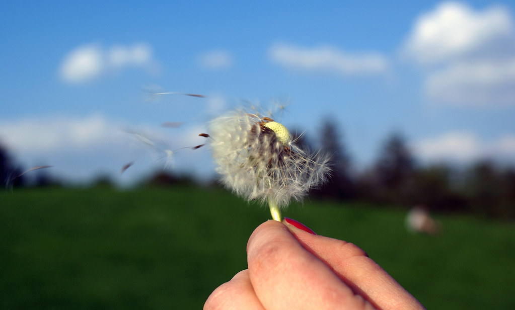 Image result for allergies