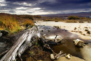 Loch Shin roots | by Colin Campbell (Bruiach)