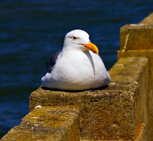 seagull rest | by Mr MAMAZ