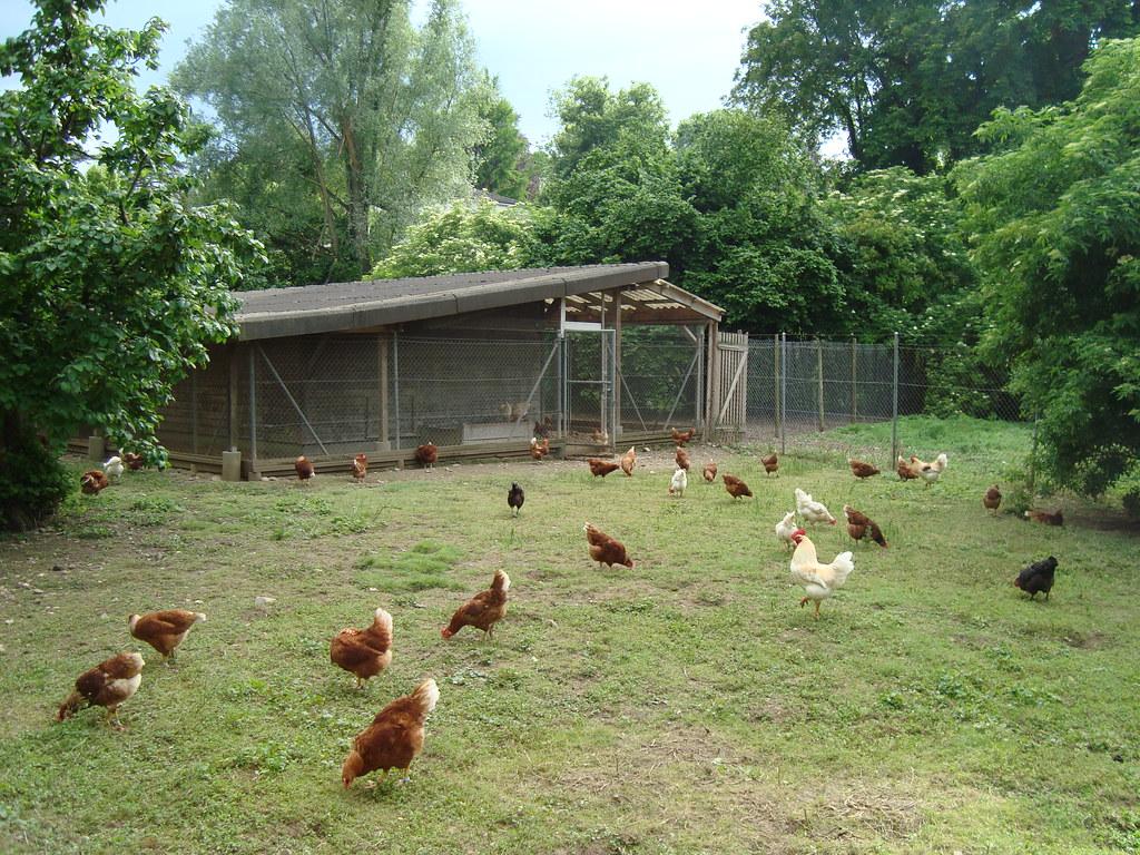 Hühnergehege hühnergehege beim teichuferweg simon richard flickr