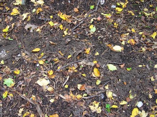 Piso de tierra y hojas berl n 2005 lucy nieto flickr for Nivelar piso de tierra