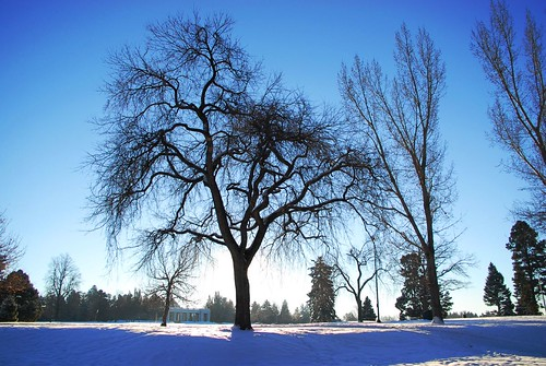 cheesman park blue | by pbo31