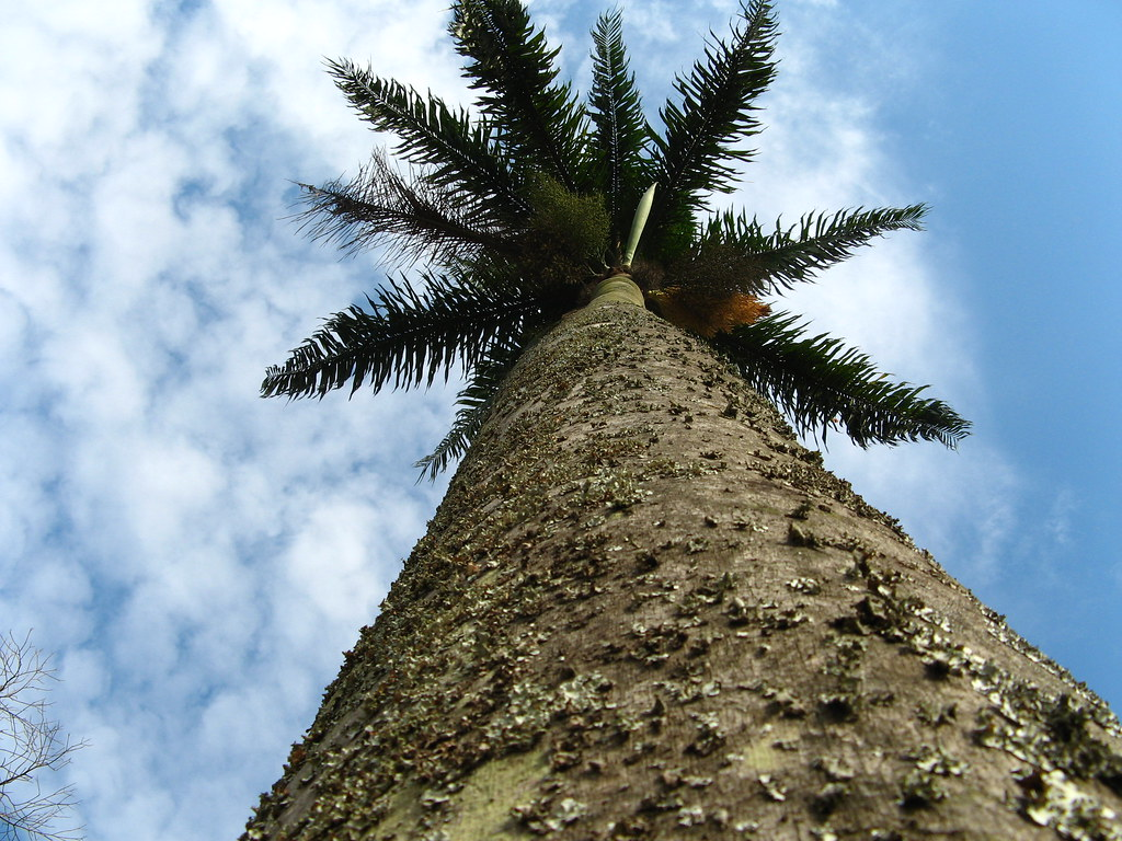 Palmeira e sao paulo 8