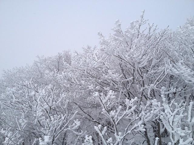 御在所岳 観光リフト 樹氷