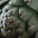 artichokes-4