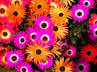 Solar Power. | by musicman67