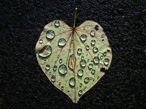 Thanksgiving 07 Heart leaf | by Sea Moon
