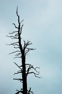 dead tree | by Rory