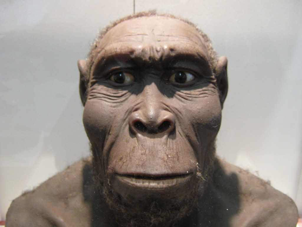 Homo Erectus: Facts About the 'Upright Man'