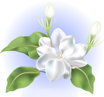 sampaguita flower this sampaguita flower artwork is a grandfather clipart grandmother clipart black and white
