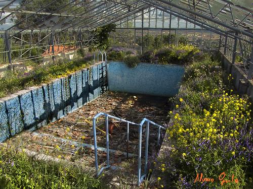Piscina abandonada piscina con cesped natural alvaro for Piscinas oporto