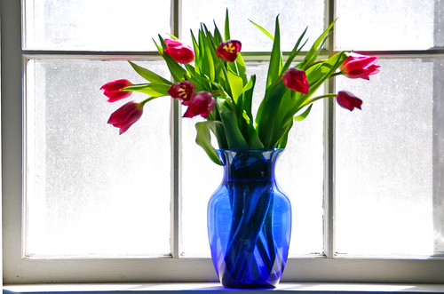 tulips in window | by Muffet
