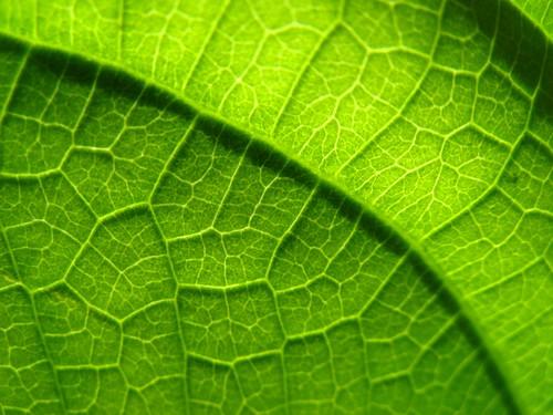 Hoja textura cahuita patricio del sol flickr for Arboles de hoja caduca
