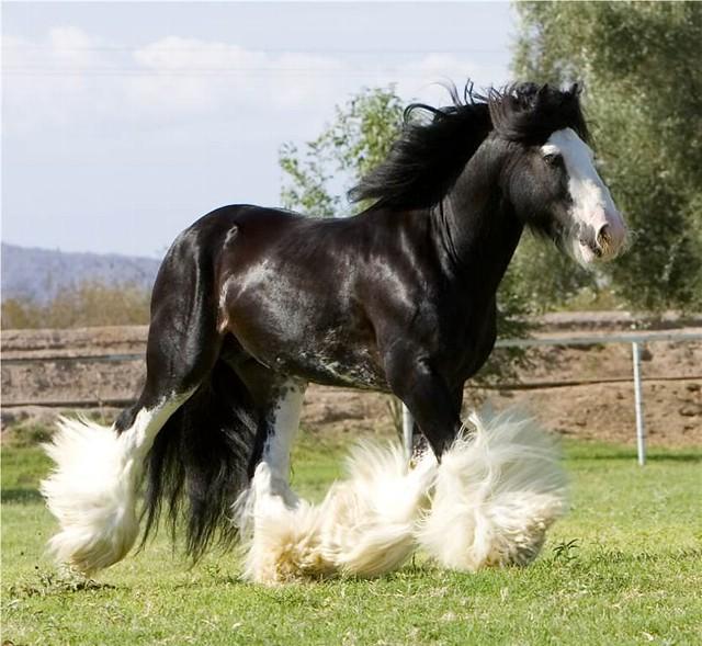 Кони лошади красивые фото
