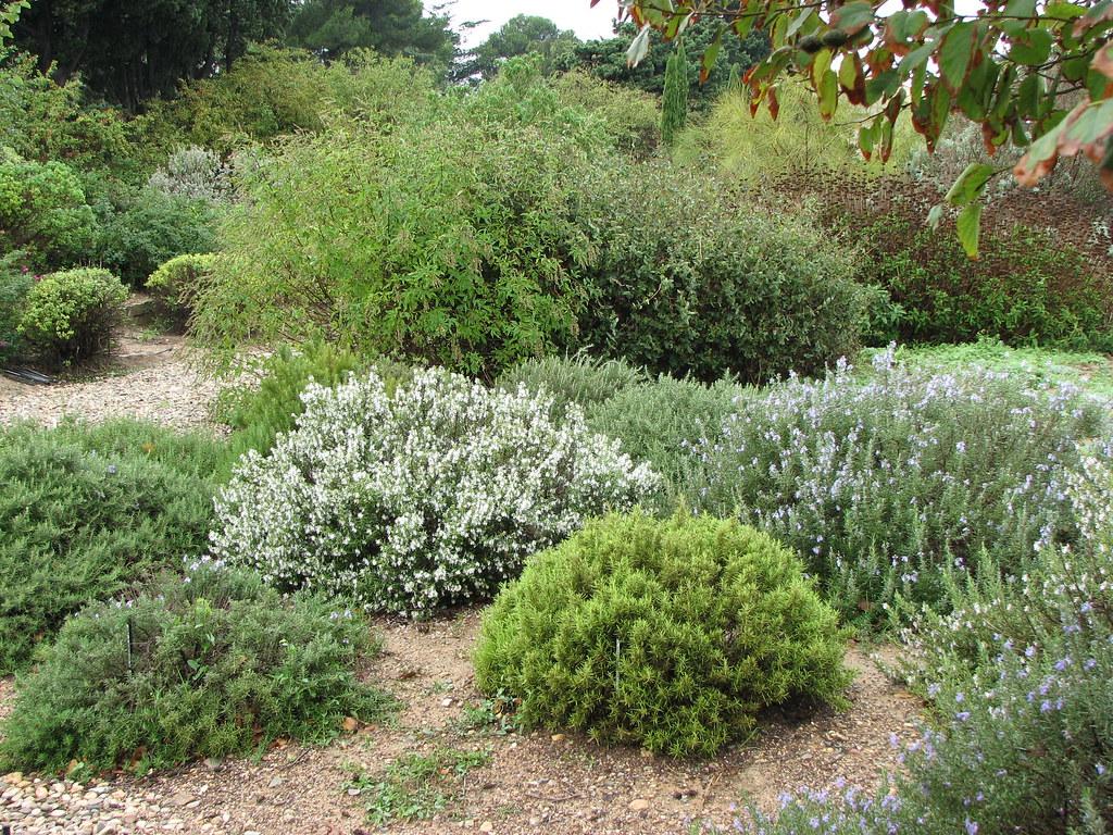 the trial garden at ppinire filippi wwwjardin seccom - Jardin Sec