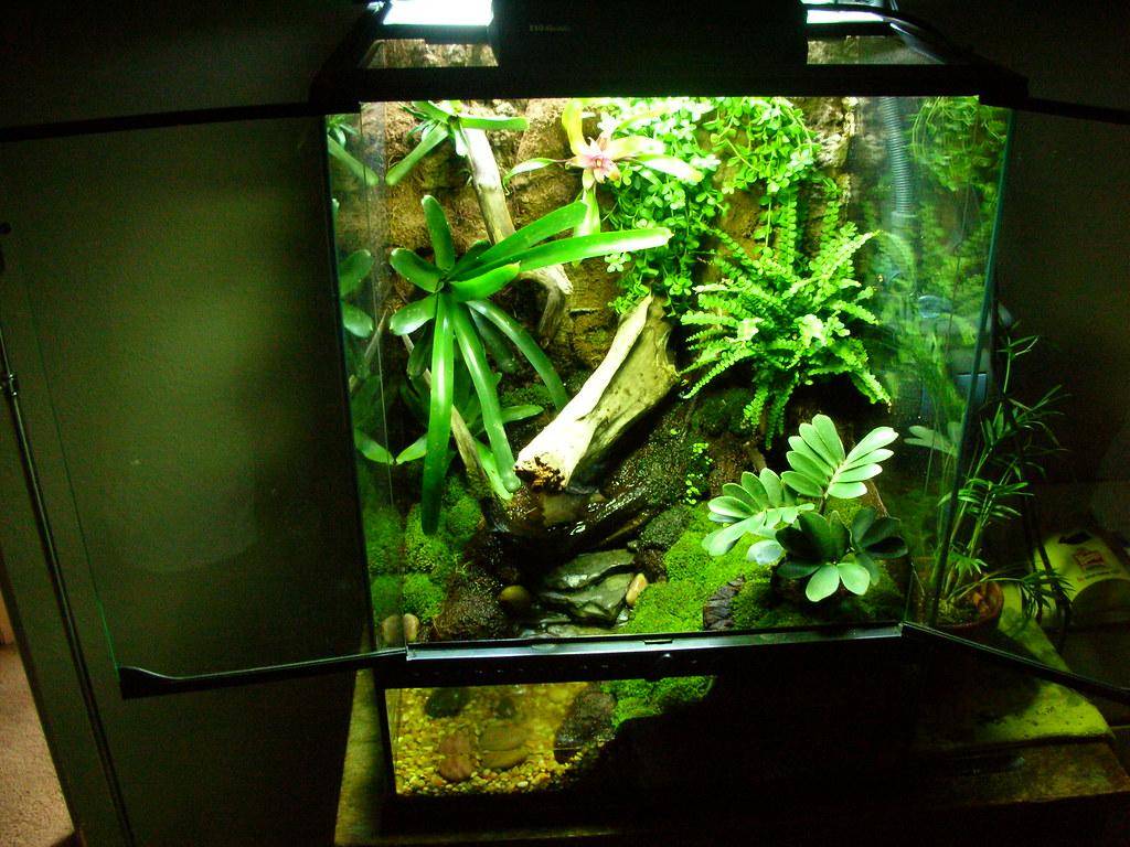 Dart Frog Vivarium (8)   kyleskush   Flickr 10 Gallon Dart Frog Vivarium