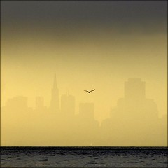 The City, the fog, the bird. | by me*voilà