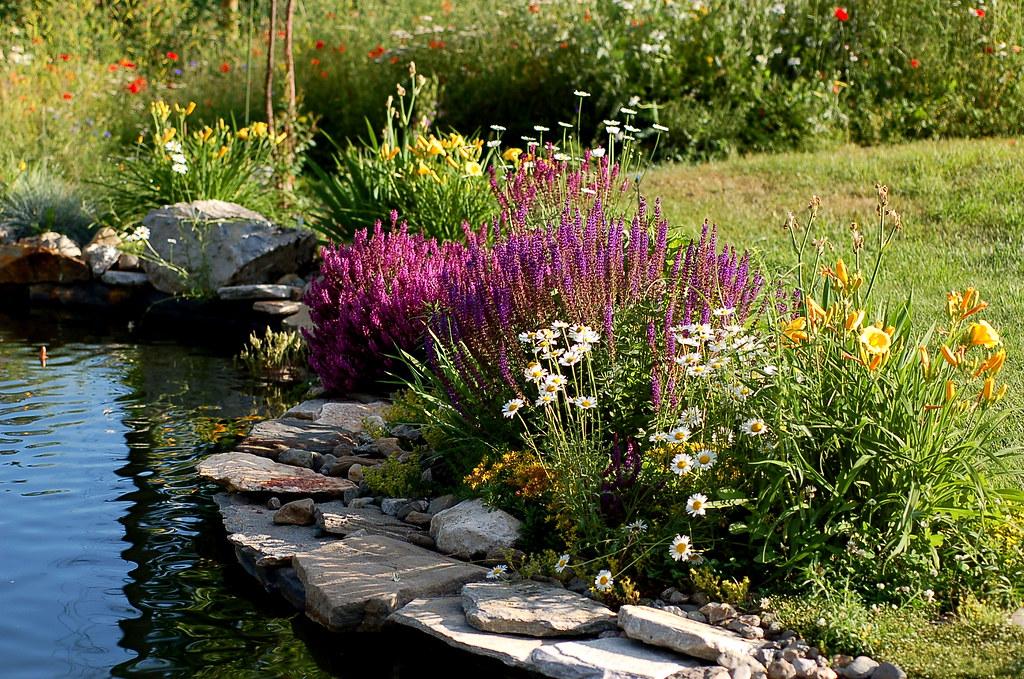 Landscaping around the pond lawatha flickr for Koi zone pond aquatics