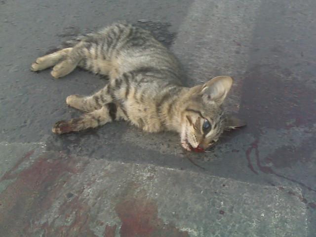 Gato Muerto Gato Muerto En La Esquina De Mi Casa Una