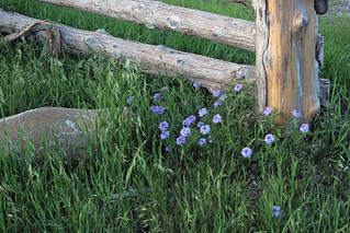 Fencepost Color | by Lightning Bug Creek
