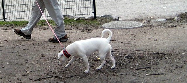 Dogs in Helsinki