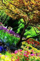 Buchart Gardens beautiful trees and plants | by tibchris