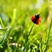 Ladybug Hangin
