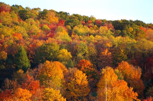 Autumn trees in pennsylvania autumn hillside in north for Trees garden of jane delawney blogspot