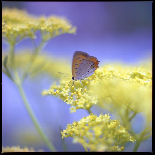 Yellow and light blue (HASSELBLAD 500C/M) | by potopoto53age