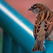 Vegas Sparrow