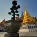 Bonsai Tree and golden Stupa