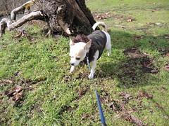 Beaker at the park