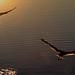 Birds perspective