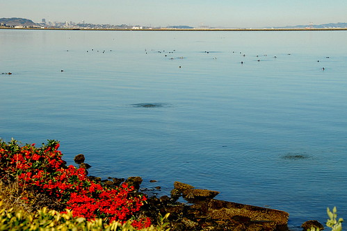 Early spring at San Francisco Bay (早春海湾 - 春节快乐!) | by Y. Peter Li Photography