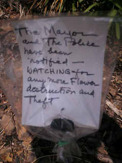 the flower bandit of pittsburgh | by passiveaggressivenotes