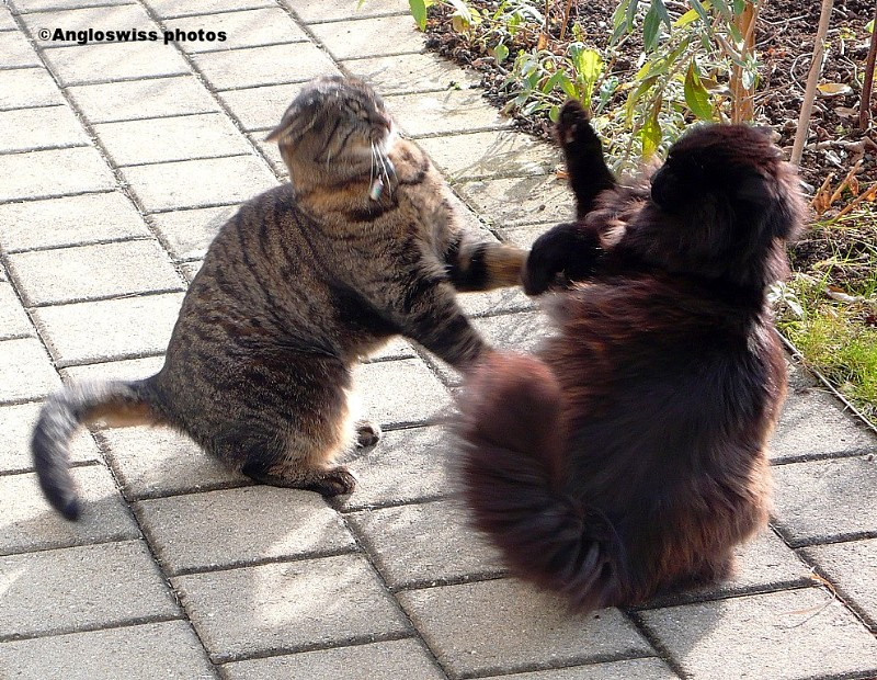 Tabby and Nera - even sisters fight sometimes