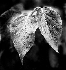 Leaves.jpg | by claphoto