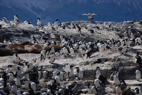 Birds and Seals on Island Near Ushuaia, Argentina | by RV Bob