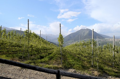 Val di Non..apple trees everywhere!! | by Pampara  back!!