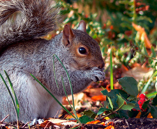 DC Squirrel | by Vicki's Pics