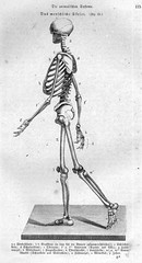 skelett / human skeleton | by polapix