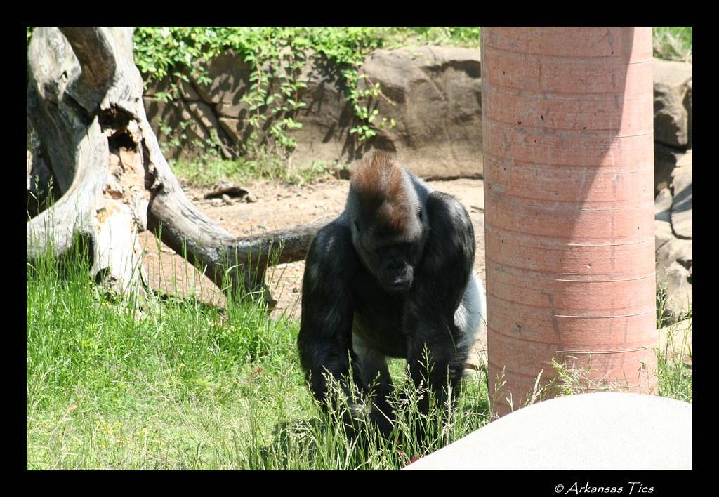 Little Rock Zoo  Pris Weathers  Flickr