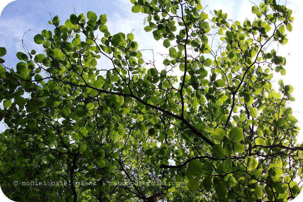 Spring green in the Arboretum