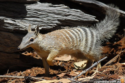 numbat report Numbat: an interactive software tool for fitting δχ-tensors to molecular coordinates using pseudocontact shifts.